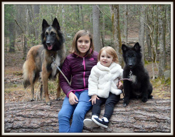 tervuren dogs
